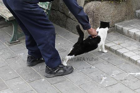 ネコを愛でる☆
