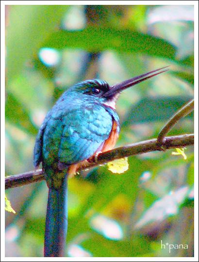 author : hiyoko | 旅行記 > Costa Rica ...