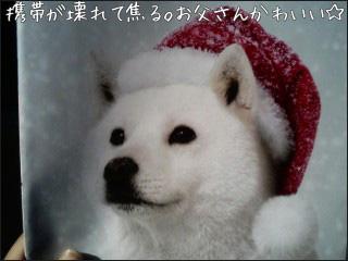 081227keitai_dog.jpg