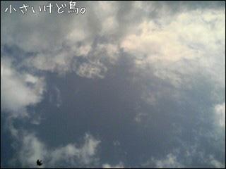 081230bird.jpg