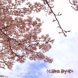 0893-120414kanazawa_sakura1.jpg