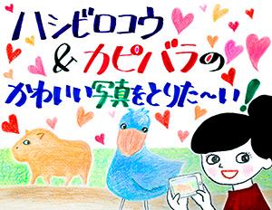 171003_kapibara_hashibiro.jpg