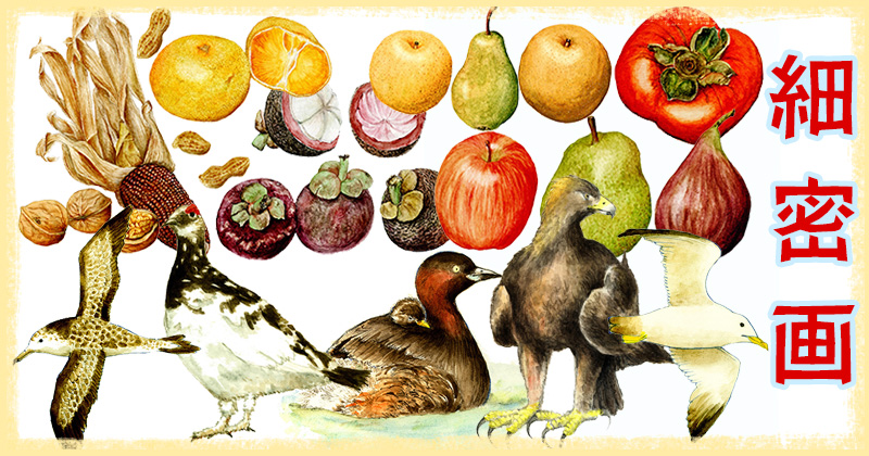 植物画 博物画 鳥 果物 細密画 水彩画 透明水彩