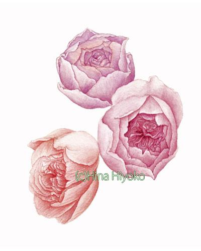041224three_roses1.jpg