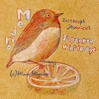 130209birds001mejiro3.jpg