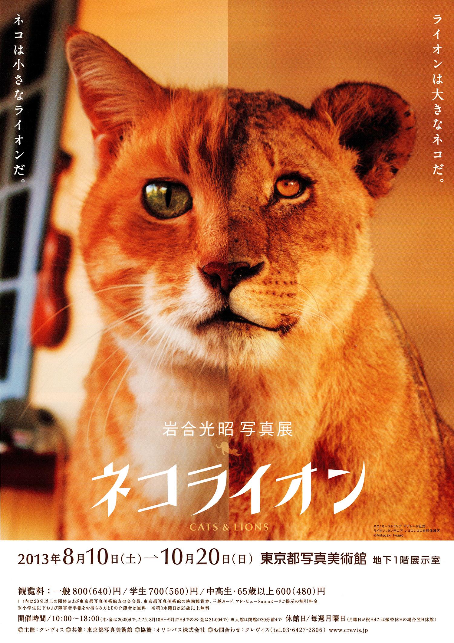 130904_neko-lion001.jpg