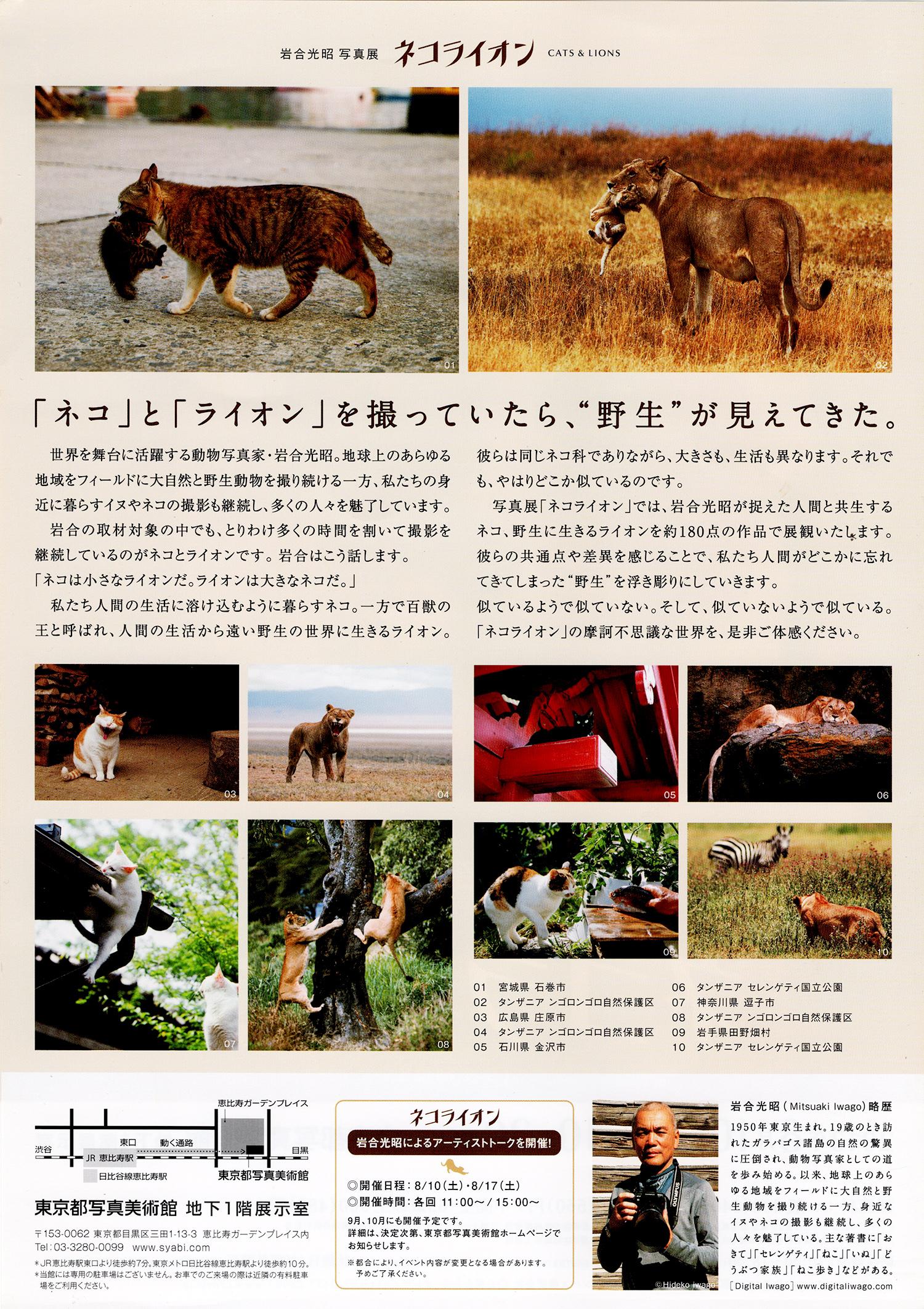 130904_neko-lion002.jpg
