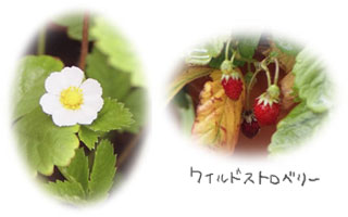 030902berry10.jpg