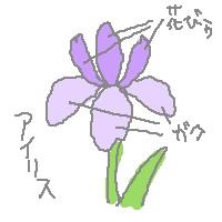 030821iris1.jpg
