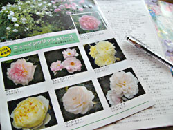041107rose_catalog.jpg