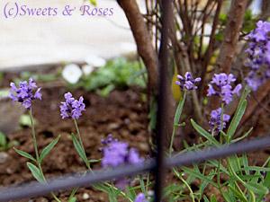 990528e_lavender.jpg
