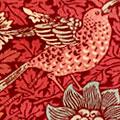 bird_anemone2.jpg