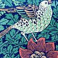 bird_anemone1.jpg