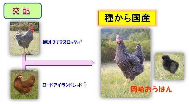 130314okazaki_ouhan3.jpg