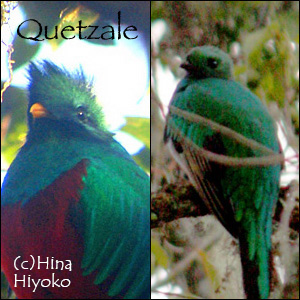 181215_quetzale.jpg
