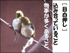 090315mejiro3.jpg