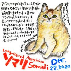 201222_cat021Somali_cs.jpg