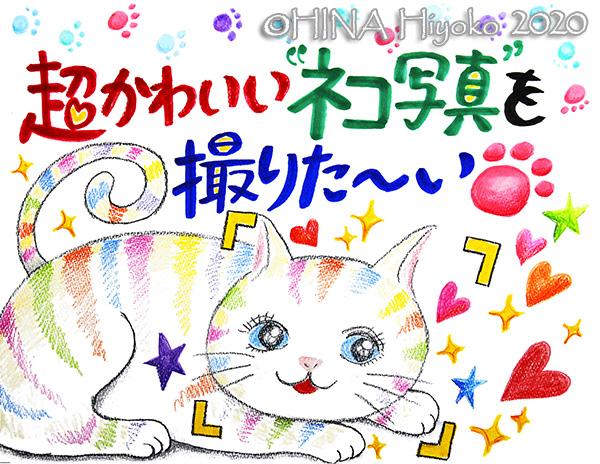 200114_cat1_3web.jpg