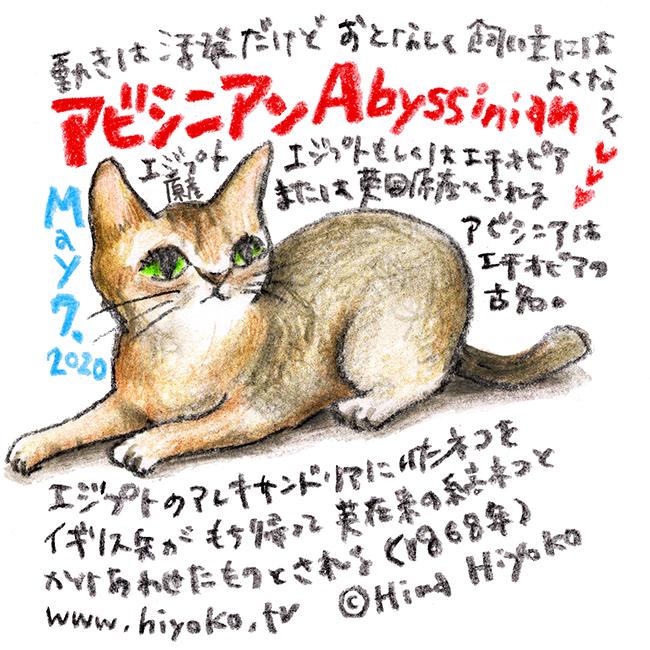 200507_cat008abyssinian_c3s.jpg