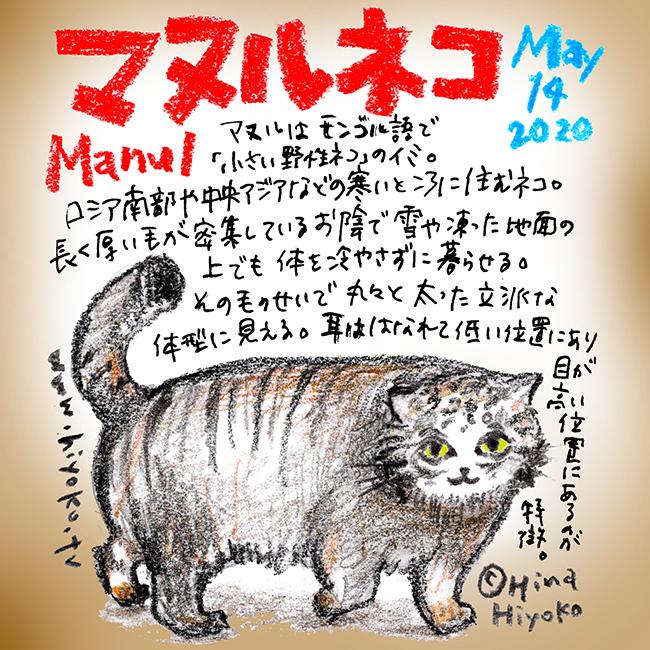 200514_cat009manul_c2s.jpg