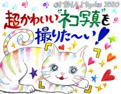 200114_cat1_1web.jpg