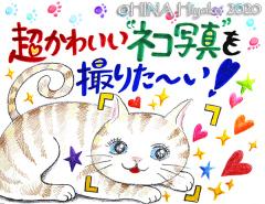 200114_cat1_2web.jpg