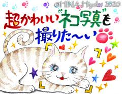 200114_cat1_4web.jpg