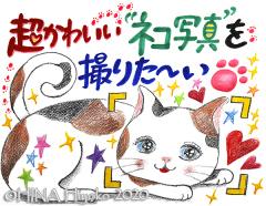 200114_cat2web.jpg