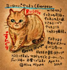 200422_cat002europian_wildcat_c2s.jpg