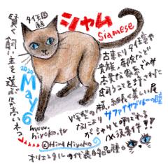200506_cat007siamese_cs.jpg