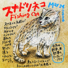 200524_cat011fishing-cat_cs.jpg