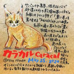 200525_cat012caracal_c3s.jpg
