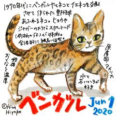 200601_cat013bengal_c2s.jpg
