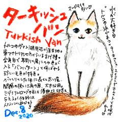 201208_cat014turkish-van_cs.jpg