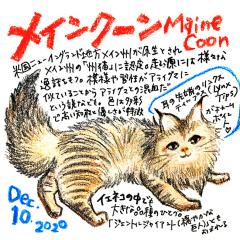 201210_cat015Maine-coon_cs.jpg