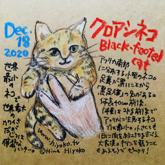 201218_cat019bleck-footed_cs.jpg