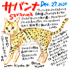 201227_cat023savanna_cs.jpg
