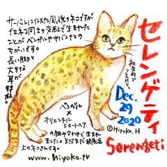 201229_cat024serengeti_cs.jpg