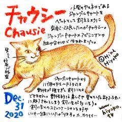 201231_cat025chausie_cs.jpg