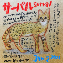 210102_cat026serval_cs.jpg