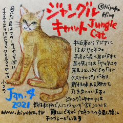 210104_cat027jungle-cat_cs.jpg