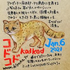 210106_cat028kodkod_cs.jpg