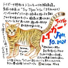210110_cat030toyger_cs.jpg