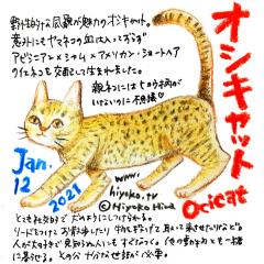 210112_cat031Ocicat_cs.jpg