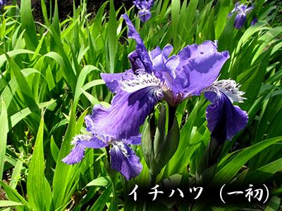 190427ichihatsu2.jpg