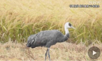 201018_kagoshima_tsuru_web.jpg