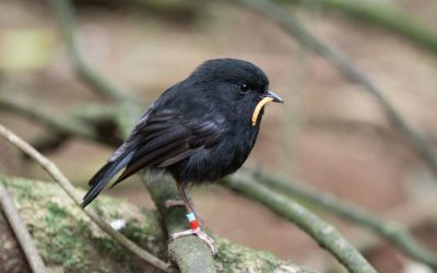 eight_col_ci-black-robin-1200.jpg